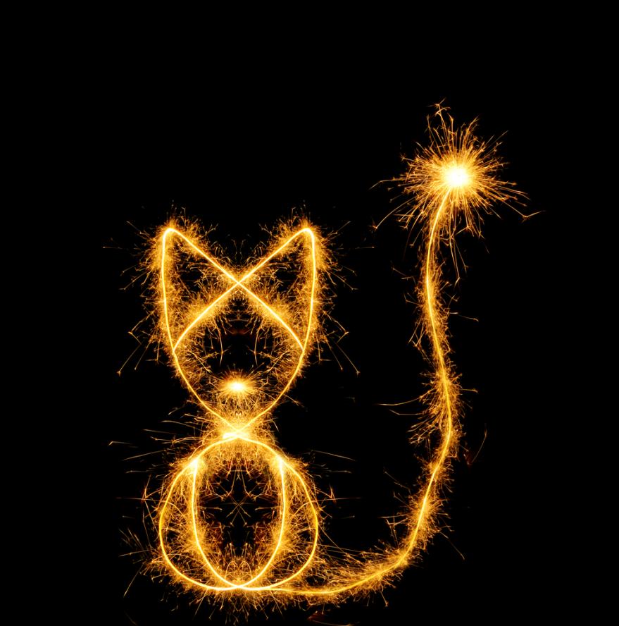 sparkler cat
